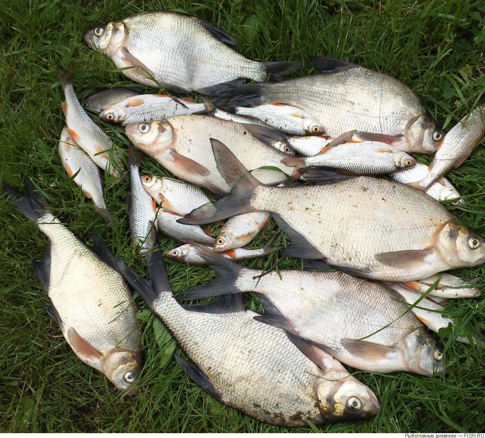 Рыбалка на юге подмосковья