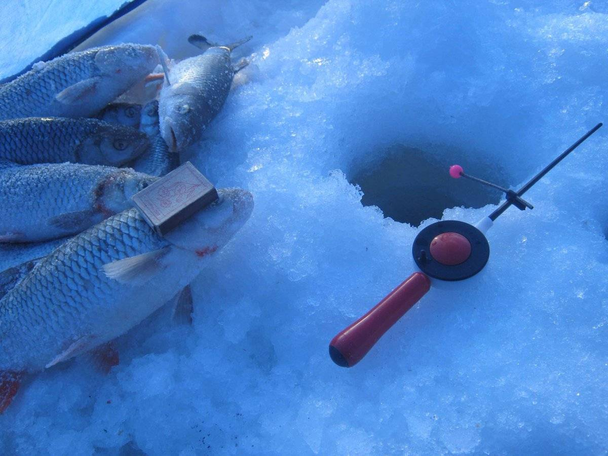 Секреты ловли сазана зимой - на рыбалке!