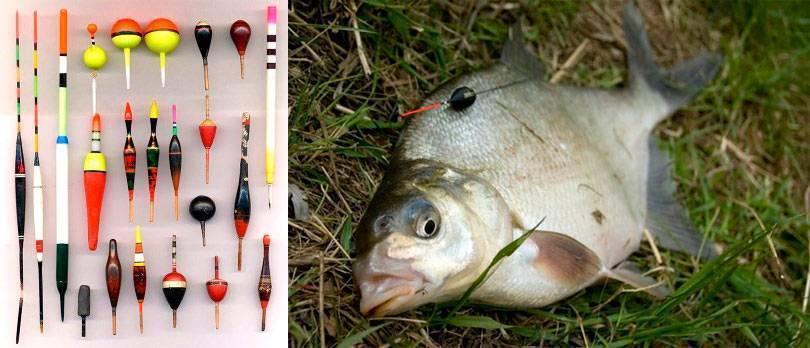 Ловля уклейки на поплавочную снасть летом – рыбалке.нет
