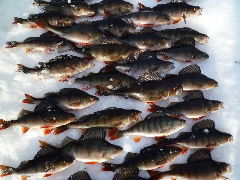 Правила рыбалки в томской области в 2020 г.