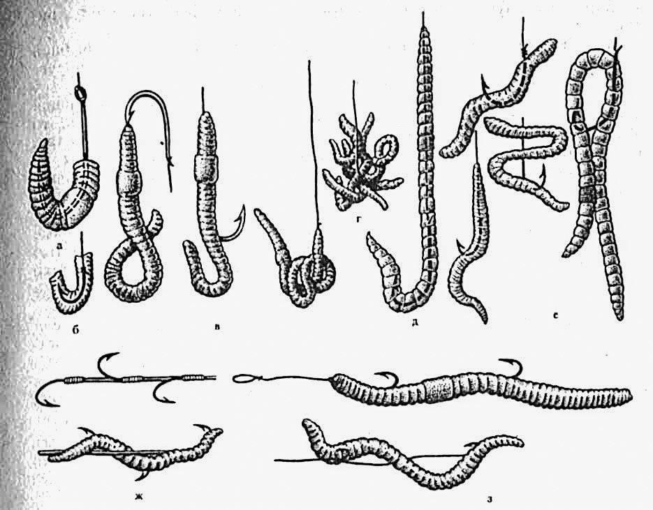 Как успешно ловить рыбу с живыми червями: 20-летний опыт рыбака