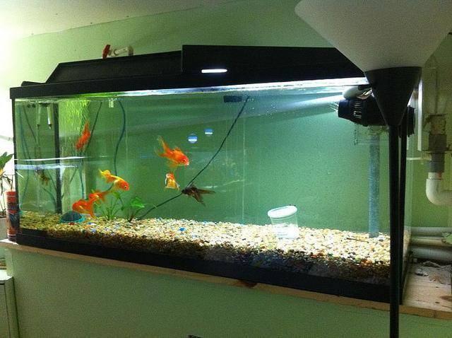 Параметры воды в аквариуме: таблица с показателями кислотности, температуры, кислорода, жесткости