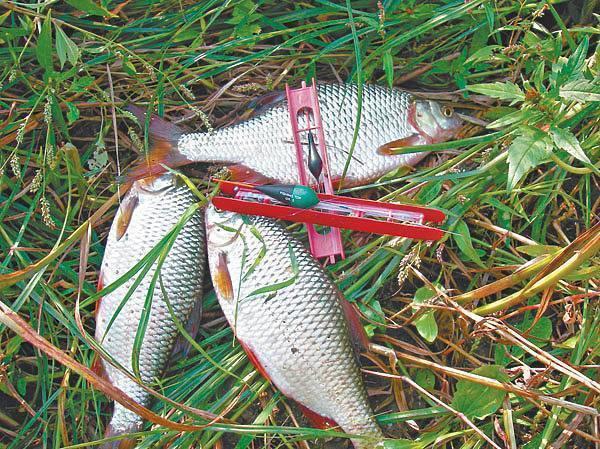 Ловля плотвы (сорожки) весной - снасти и способы ловли, насадки и прикормка