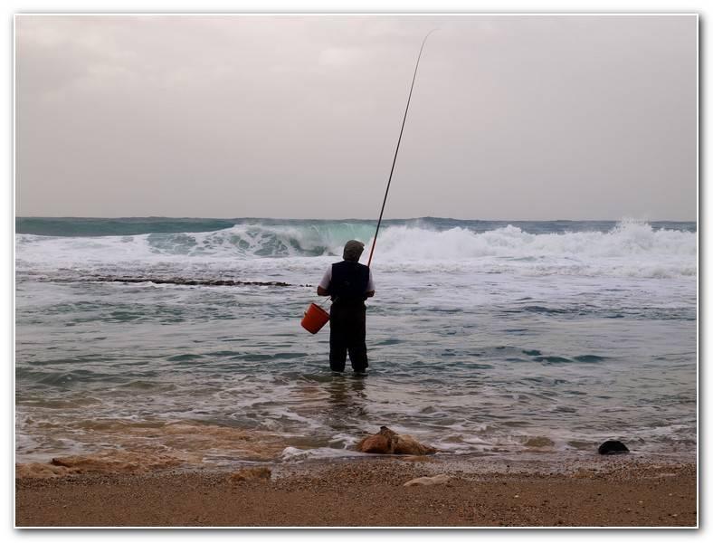 Ловля сайды: ареал обитания, приманки и способы ловли рыбы