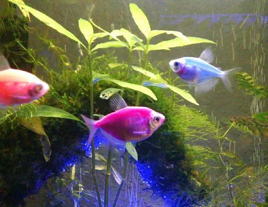 Виды и совместимость аквариумных рыбок + 165 фото