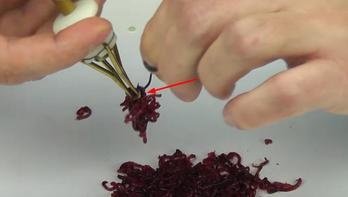 Как насаживать мотыля на крючок: как правильно одеть мотыля