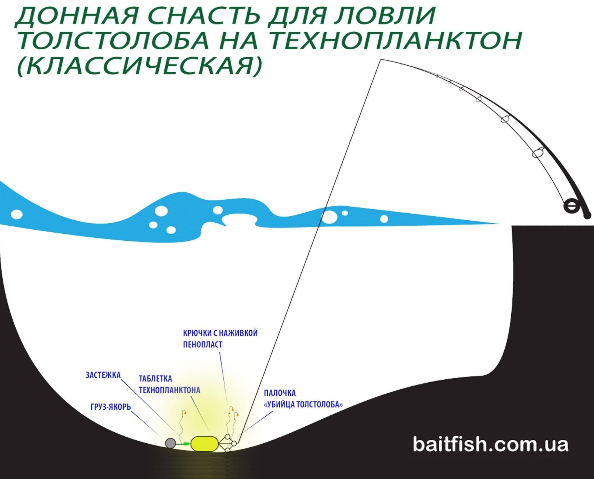 Снасти для ловли толстолобика - на технопланктон, со дна и не только, донная и с пружиной, изготовление своими руками
