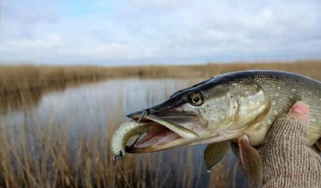 Рыбалка на щуку весной на спиннинг: в марте, апреле, мае, после схода льда