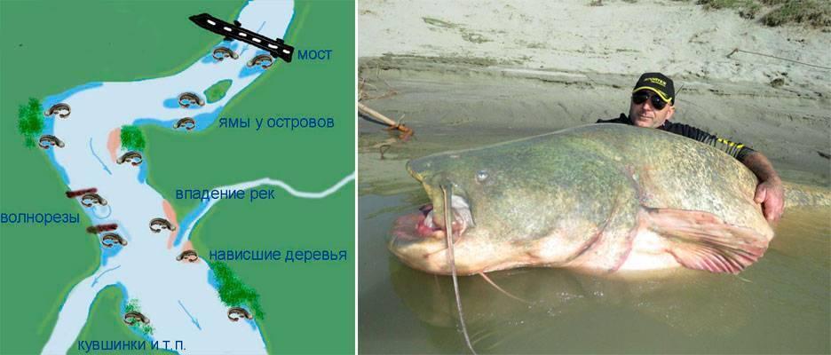 Рыбалка в финляндии: лучшие места для ловли, какие рыбы водятся, выбор снастей