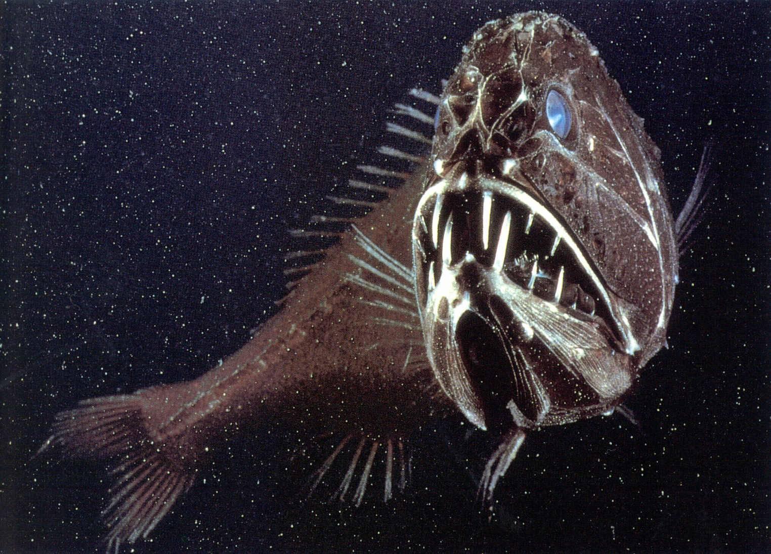 Самые опасные рыбы убийцы в мире (описание и фото)