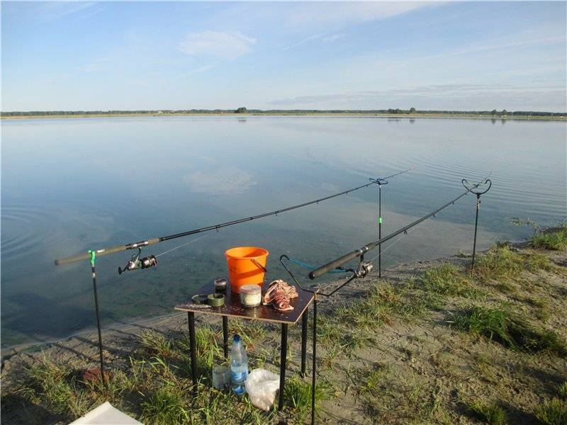 Рыбы челябинской области