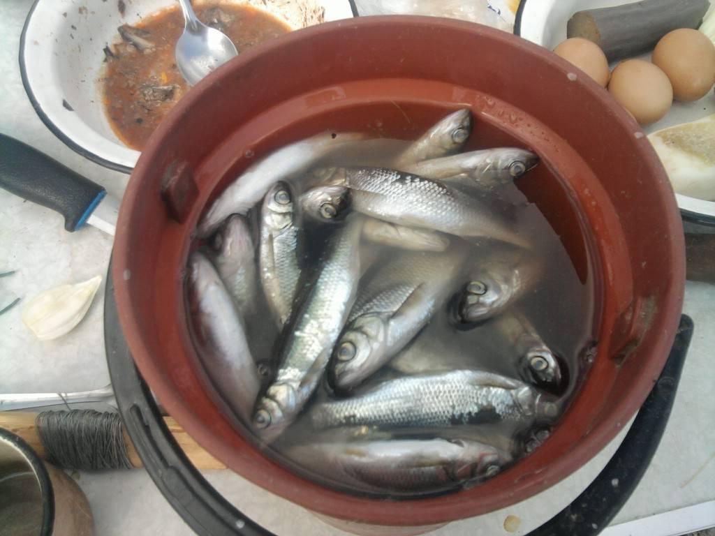 Рыба тугунок: краткое описание, полезные свойства, где водится и как ловить