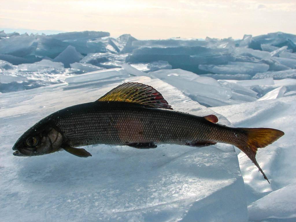 Рыбалка в новосибирске и новосибирской области: карта рыболовных мест. где ловить раков и порыбачить на удочку?