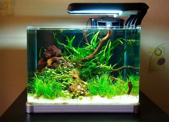 Запускаем маленький аквариум дома