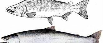 Секреты рыбалки на бычка