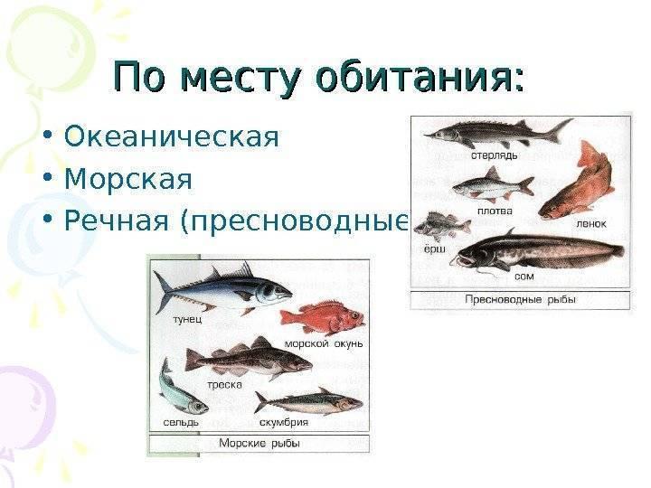 Запеченная скумбрия (63 рецепта с фото) - рецепты с фотографиями на поварёнок.ру