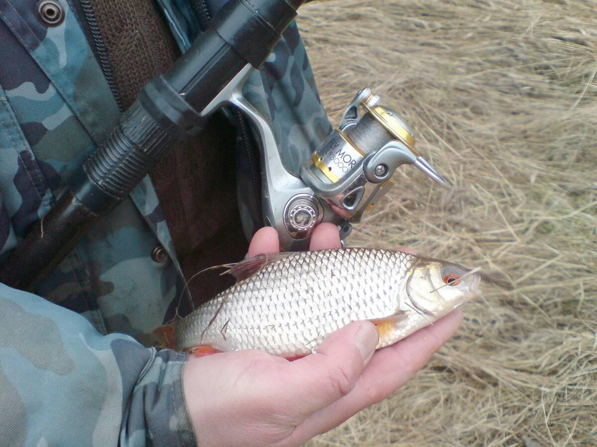 Ловля плотвы: как ловить, на что клюет, приманки, прикормка и снасти на плотву