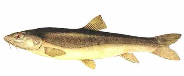 Наживки для рыбной ловли, виды наживок для успешной рыбалки