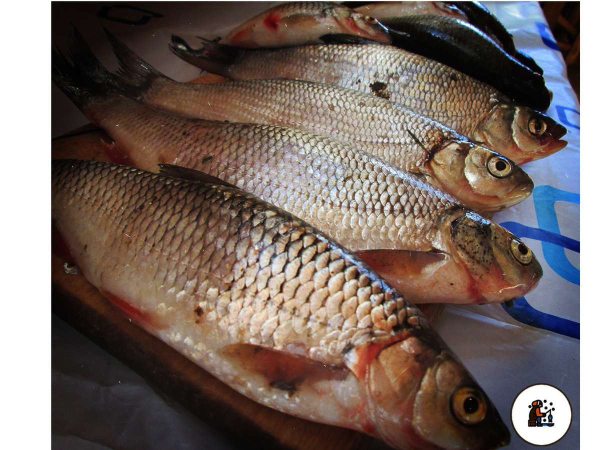 Описание рыбы щекур