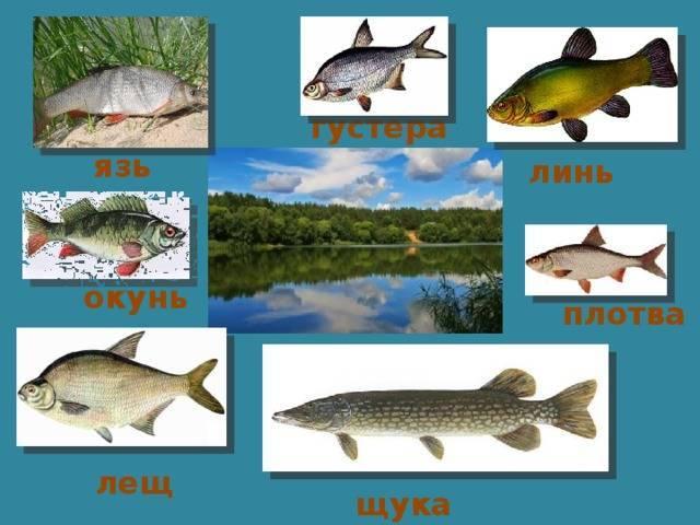 Поездка на рыбалку в астраханскую область на раскаты. октябрь 2020. день 2, 3, 4 - ловля судака и окуня.
