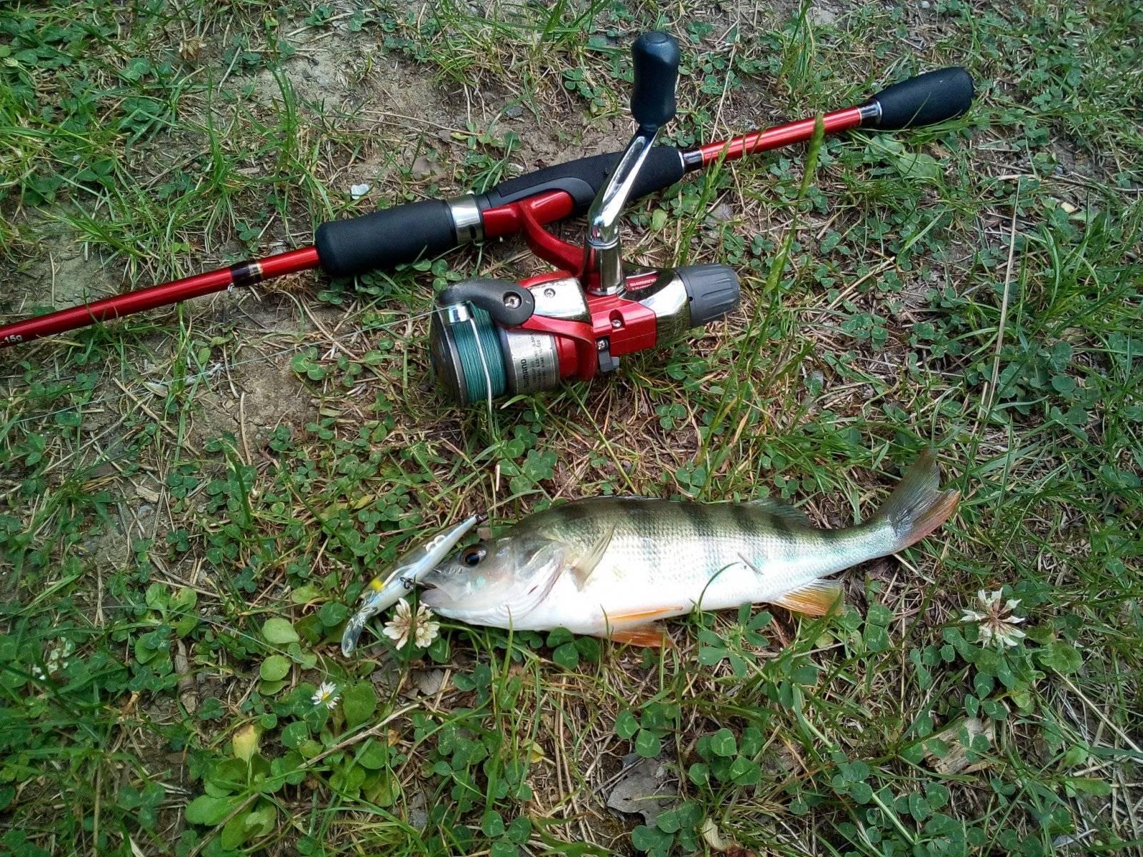 Окунь на озерах и реках — тактика и техника ловли окуня