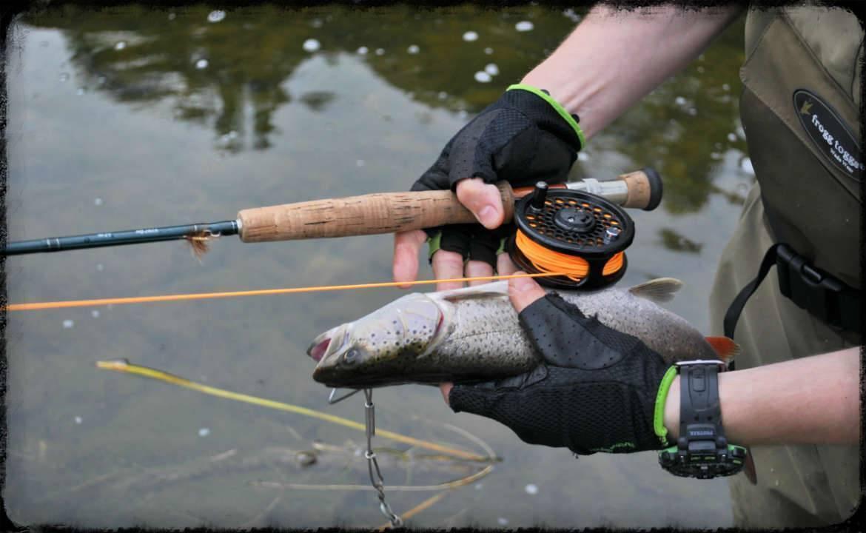 Лосось в ленинградской области. ловля  лосося, нерест.
