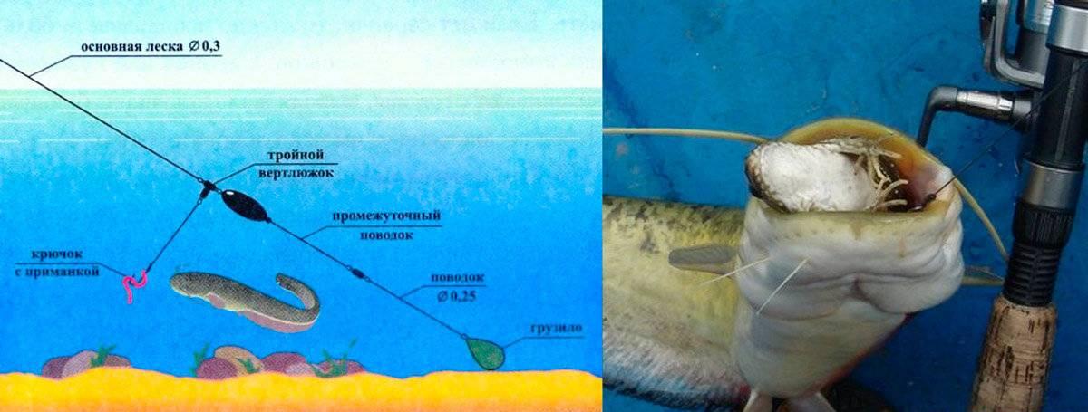 Все тонкости рыбалки на сома с берега и применения донки