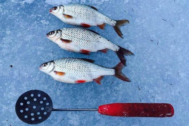 Рыбалка в глухозимье. особенности ловли и поиска рыбы