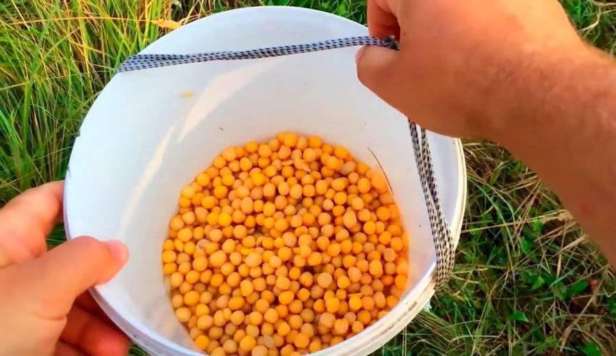 Рецепт приготовления гороховой мастырки от михалыча для ловли карася, карпа и леща