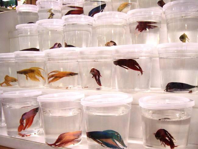 Разведение аквариумных рыбок как прибыльный бизнес