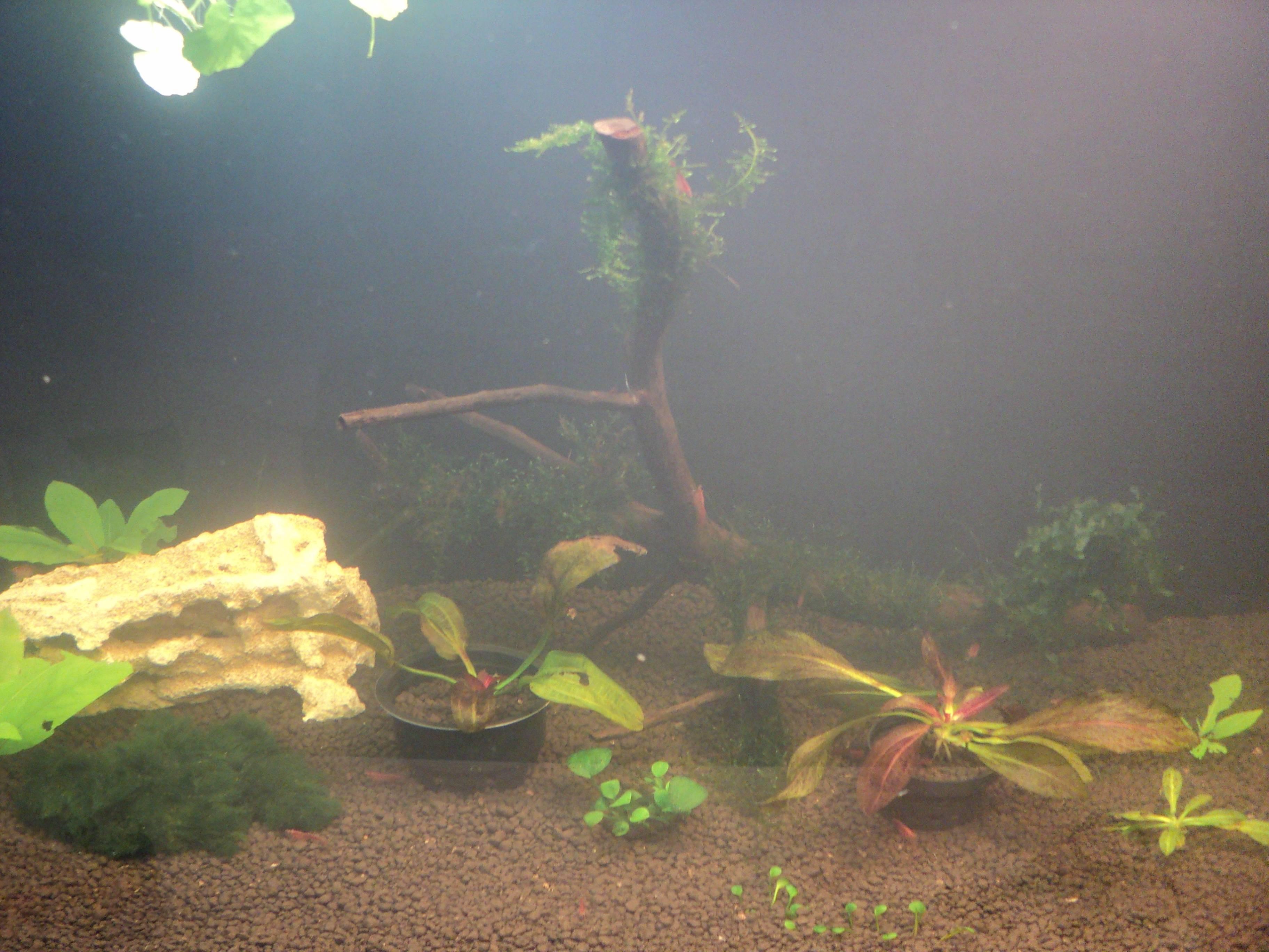Мутная вода в аквариуме после запуска: почему стала такой, что делать, если помутнела на второй день, как не допустить в будущем?