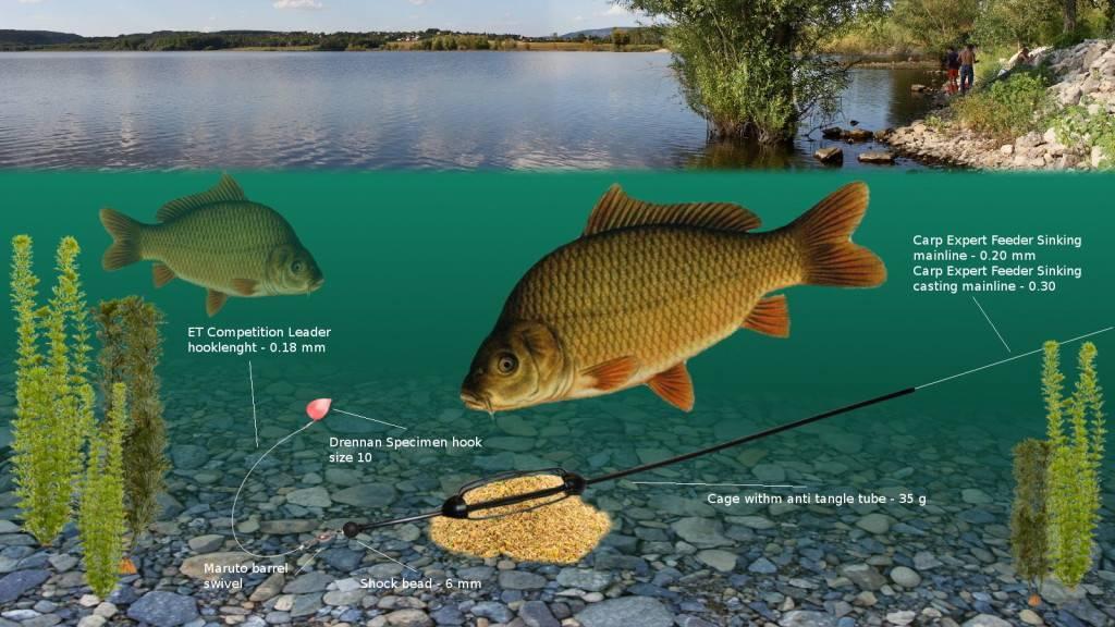 Снасти для ловли карпа: как собрать и подготовиться для рыбалки