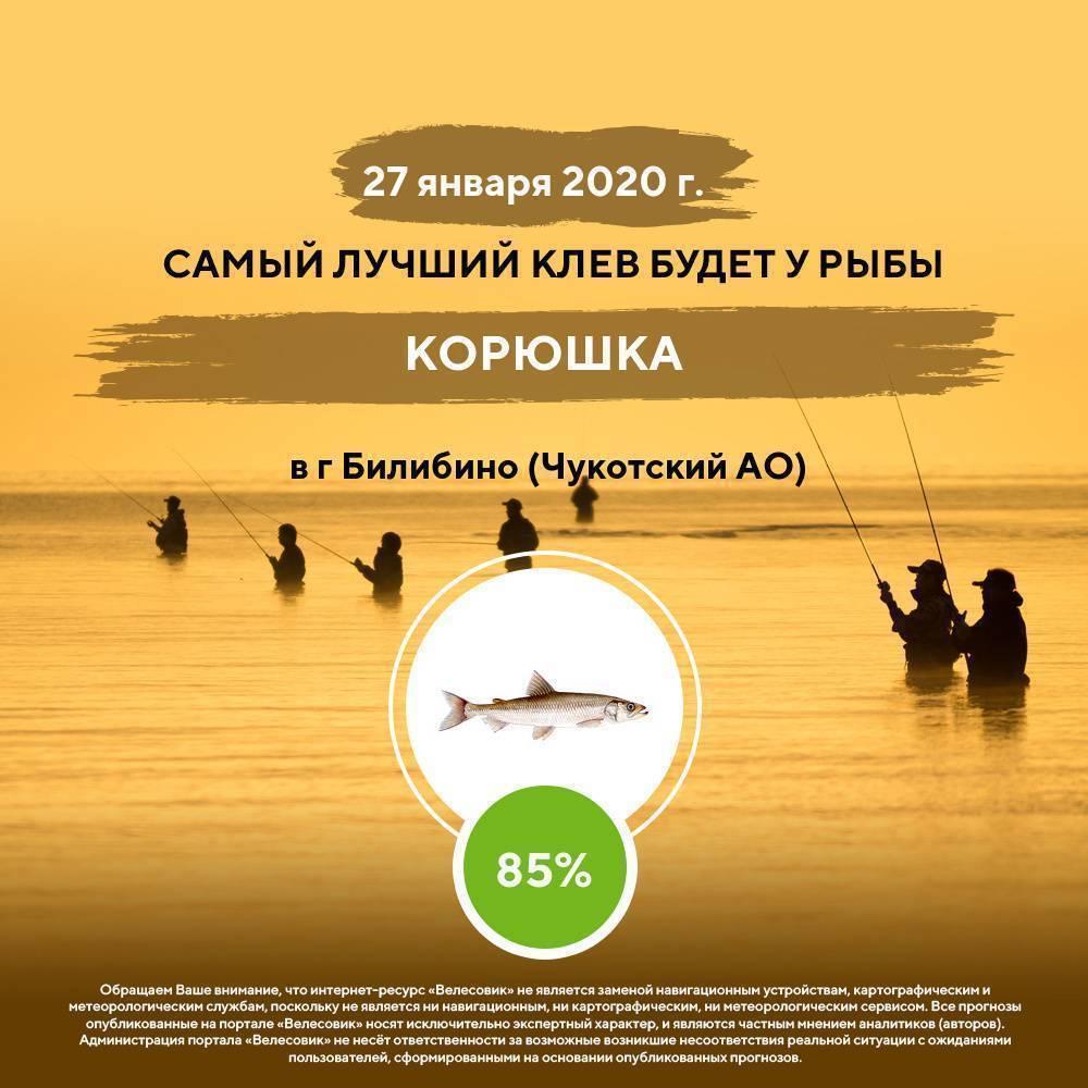 15 лучших рыболовных мест краснодарского края. платные и бесплатные   животный мир
