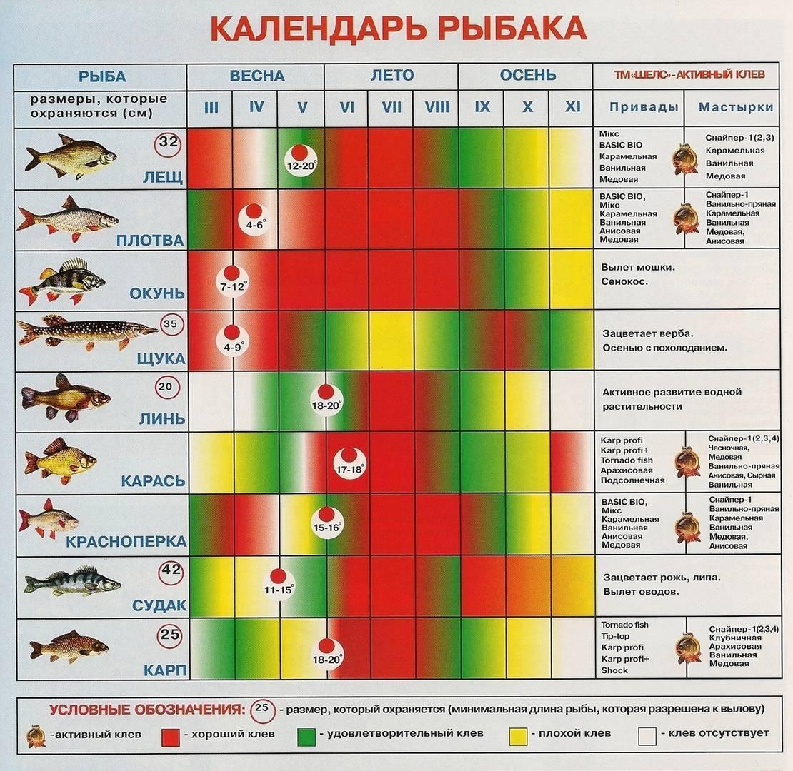 В узункольском районе прошел областной чемпионат среди любителей зимней ловли - кн