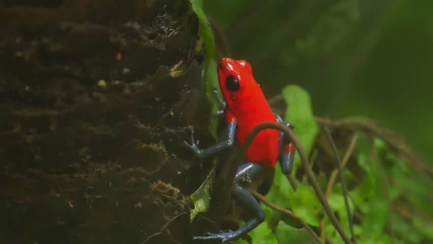 Топ-10 самых маленьких лягушек в мире