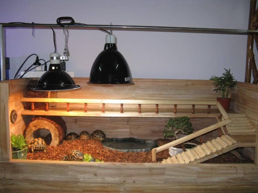 Террариум для сухопутной черепахи, выбор и обустройство