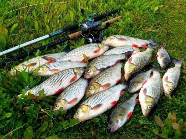 Ловля карася на реке: выбор места, снастей, прикормки и наживки