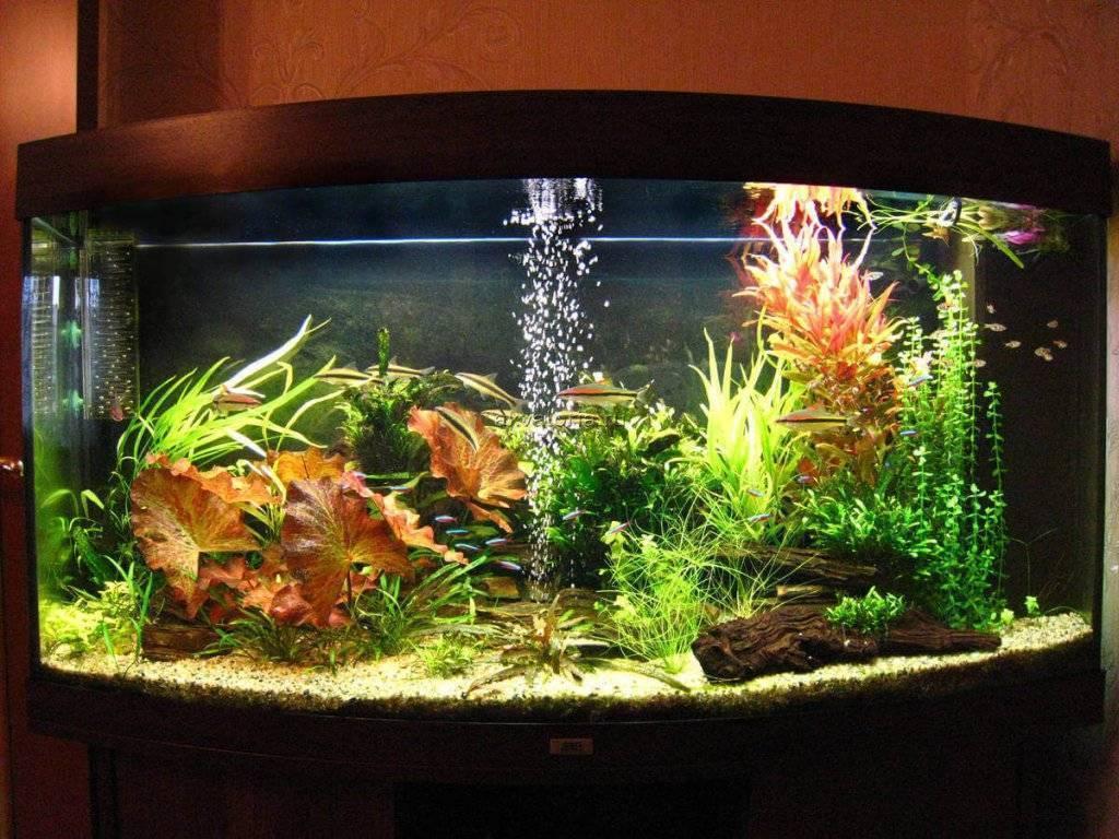 10 лучших аквариумов - рейтинг 2020