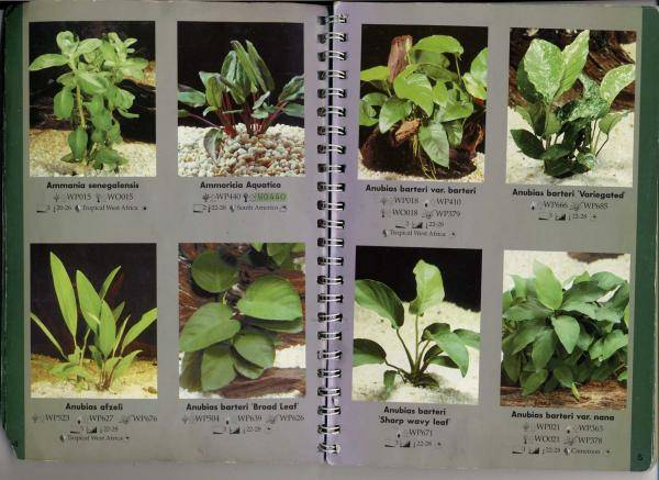 Аквариумные растения для начинающих аквариумные растения для начинающих