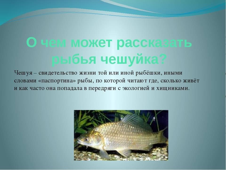 Описание болезней рыб