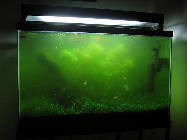 Причины загнивания растений в аквариуме и что делать