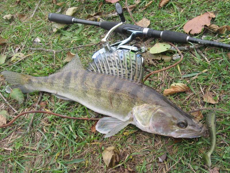 Рыбалка на ахтубе и нижней волге весной | весенняя рыбалка в астрахани: в марте, апреле и мае | погода и рыболовный календарь: какая рыба ловится