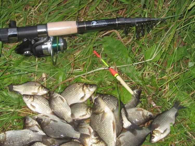 Ловля и рыбалка на карася разными способами и выбор места и наживки