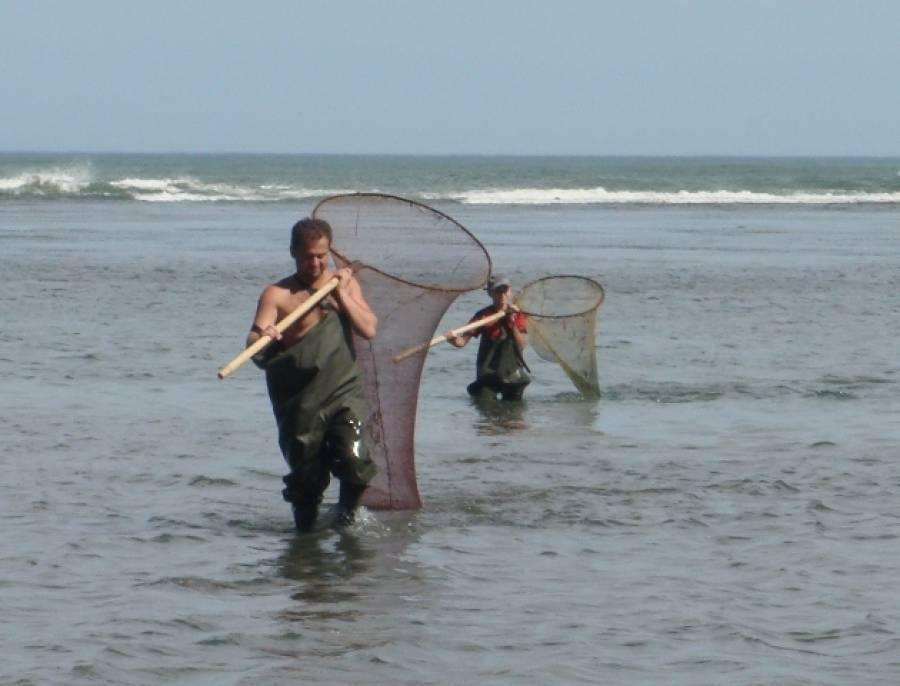 Как ловят креветок - где лучше ловить и видео инструкция по ловли