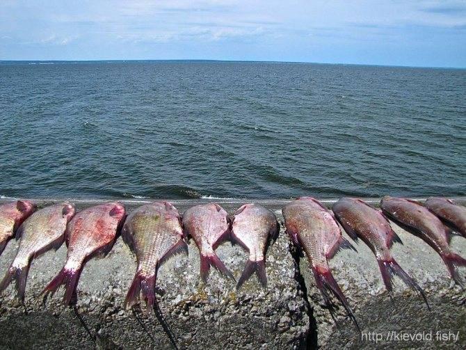 Красноярское водохранилище — особенности рыбалки