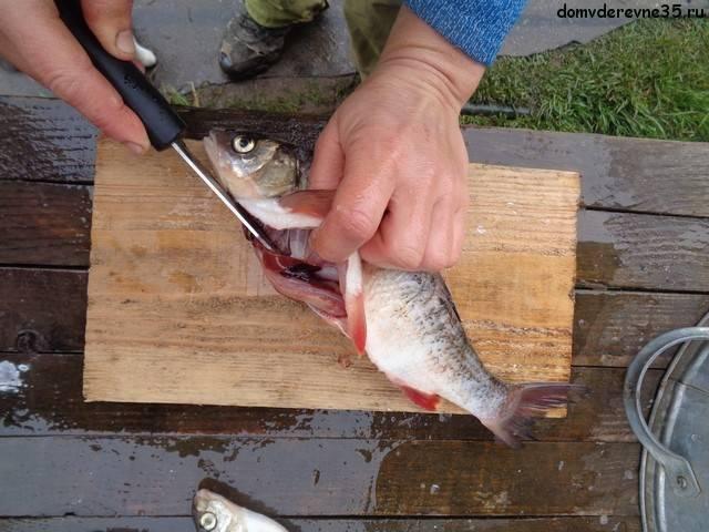 Как чистить речную рыбу от чешуи и слизи: окунь, карп, сом, судак
