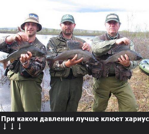 Товары для рыбалки в красноярске — 142 места