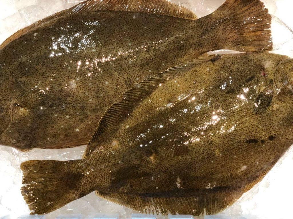Рыба палтус: вы хоть знаете, кого едите?