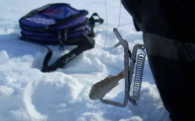 Ловля щуки на капкан летом и зимой ловля щуки на капкан летом и зимой