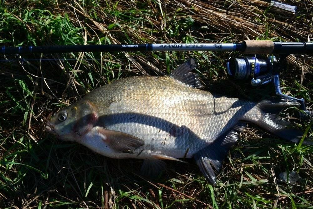 Царская рыбалка - рыболов и рыба!